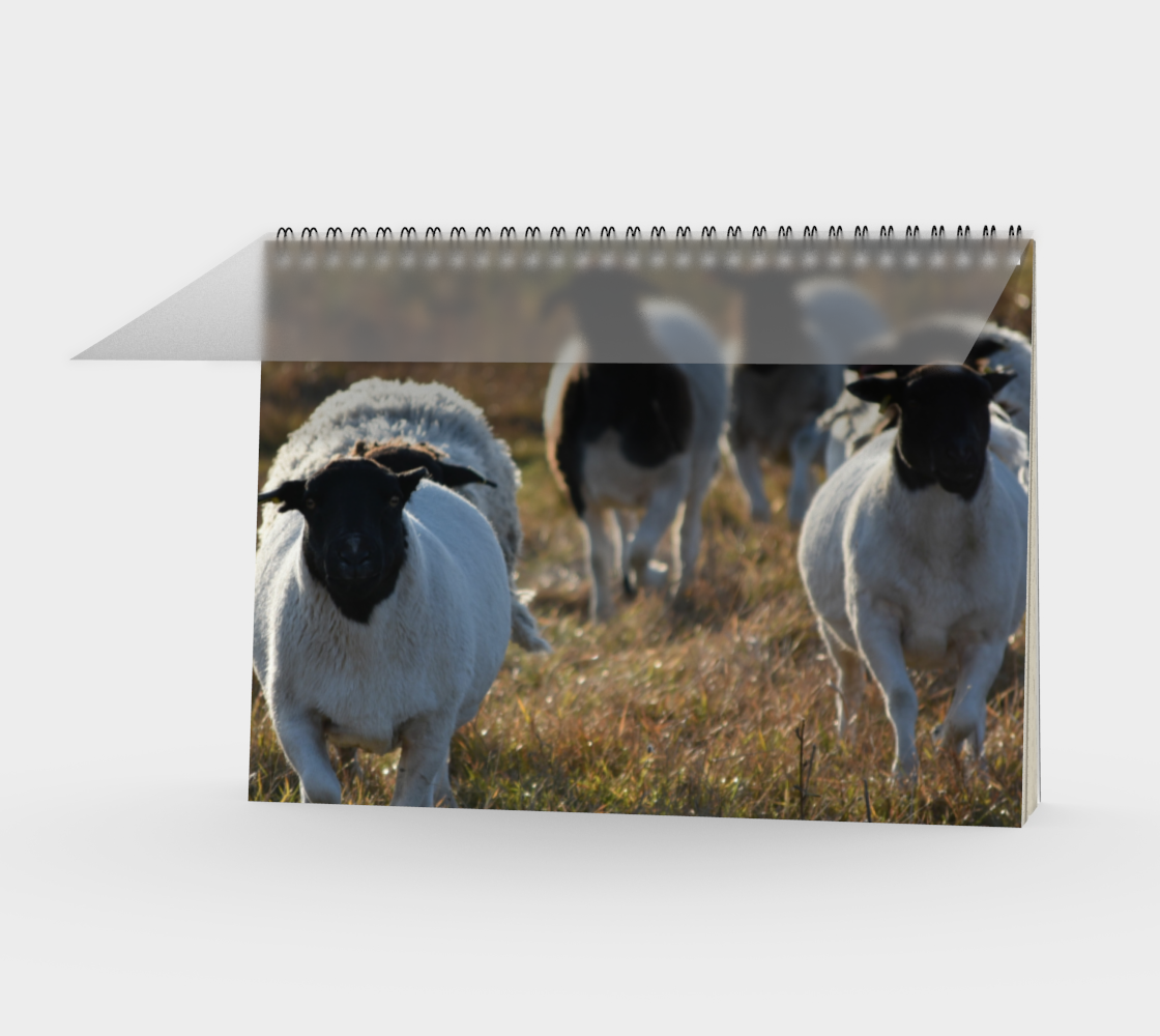 sprinting sheep preview