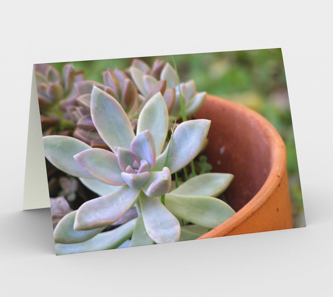 Garden Succulents aperçu