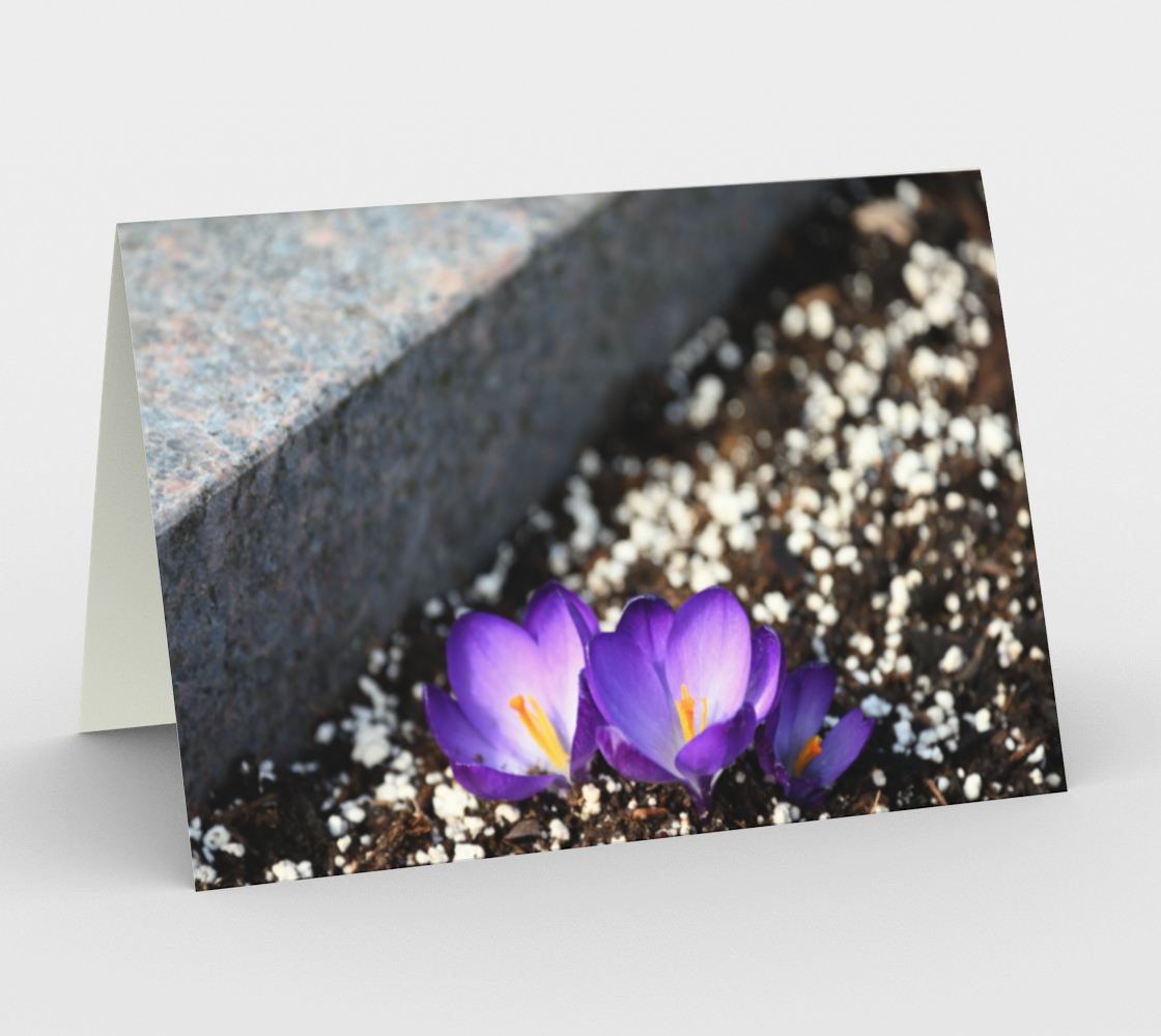 Crocuses in the city preview #1
