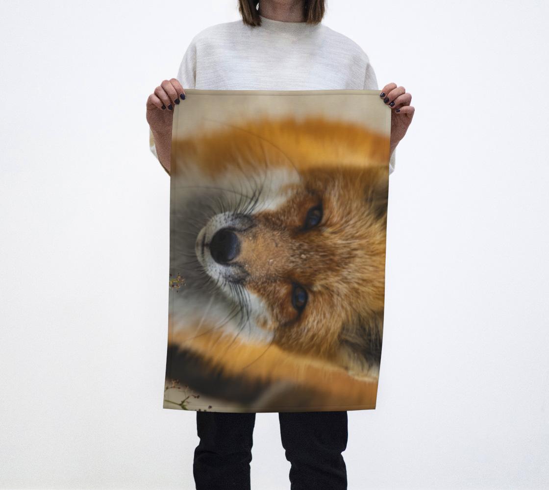 Animaux sauvages, Les yeux dans les yeux avec le renard roux aperçu