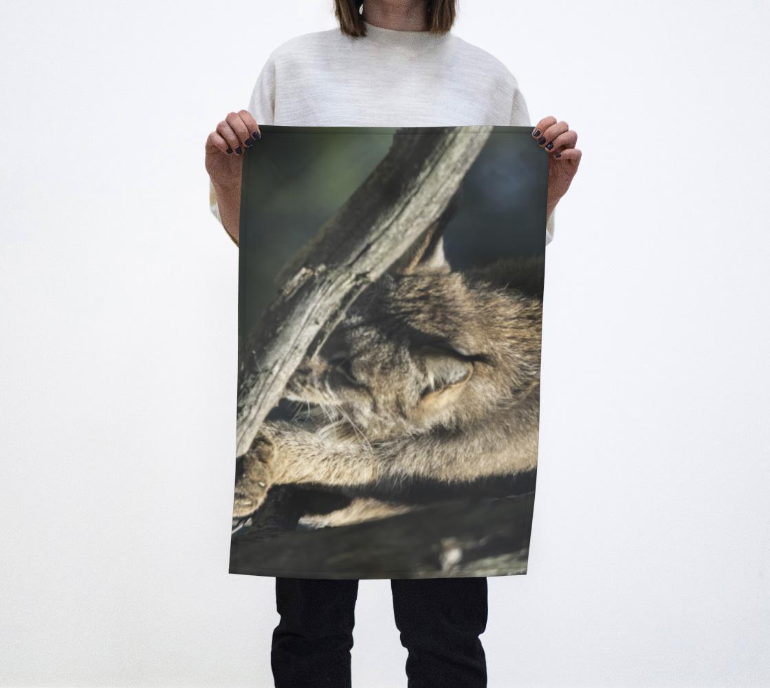 Animaux sauvages, Lynx dans les arbres aperçu