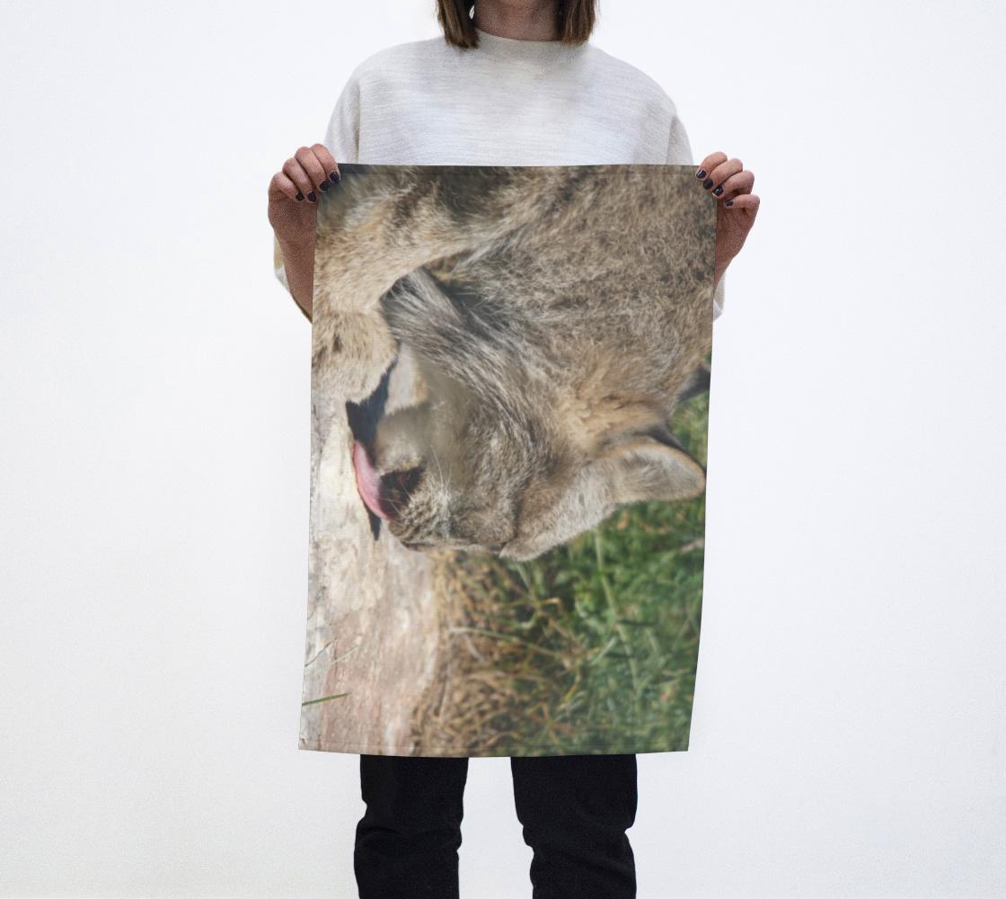 Animaux sauvages, La collation du lynx aperçu