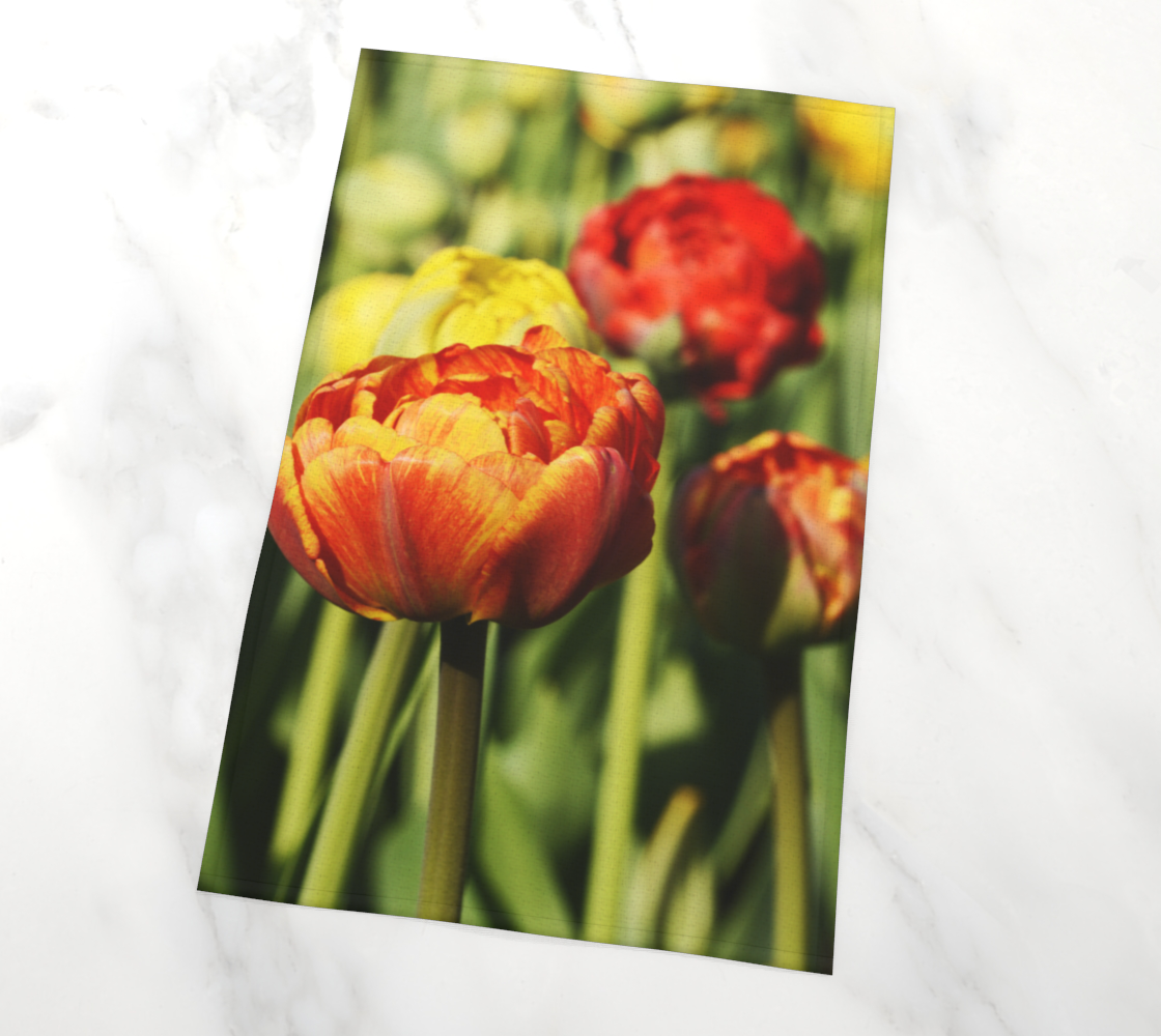 Sunshine Tulips Photography preview #2