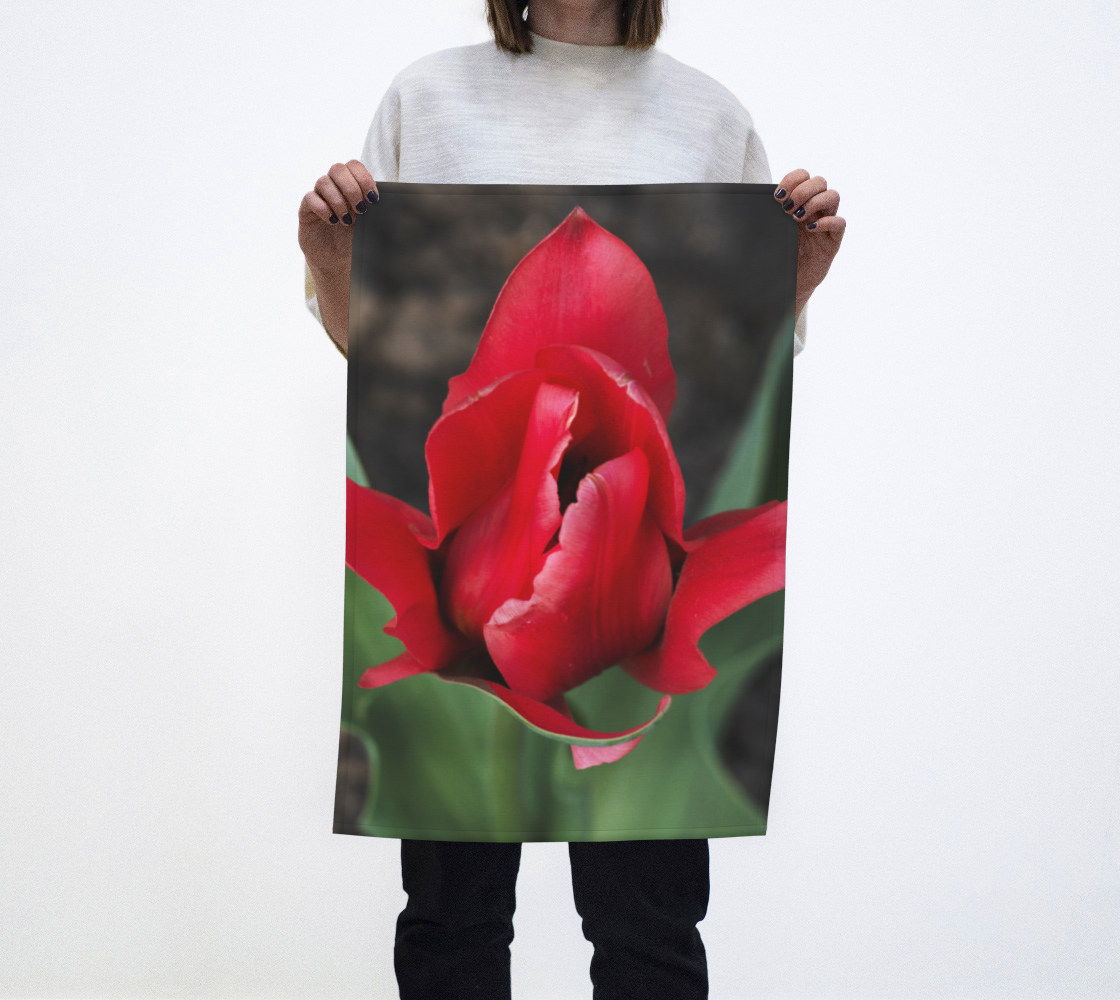 Red Tulip Photography preview