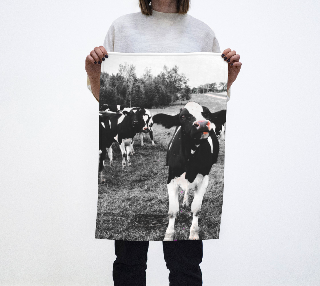 Aperçu de cows