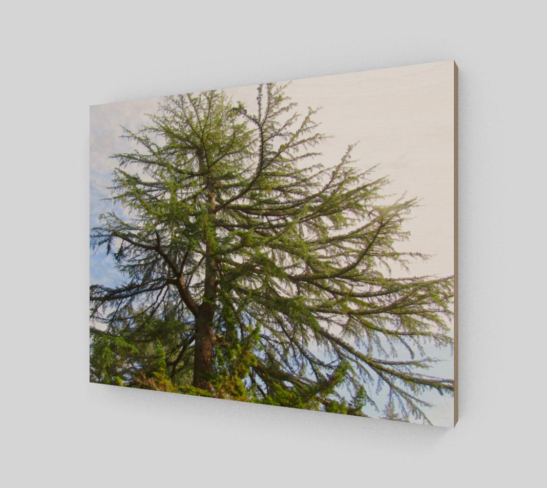 Treez preview #2