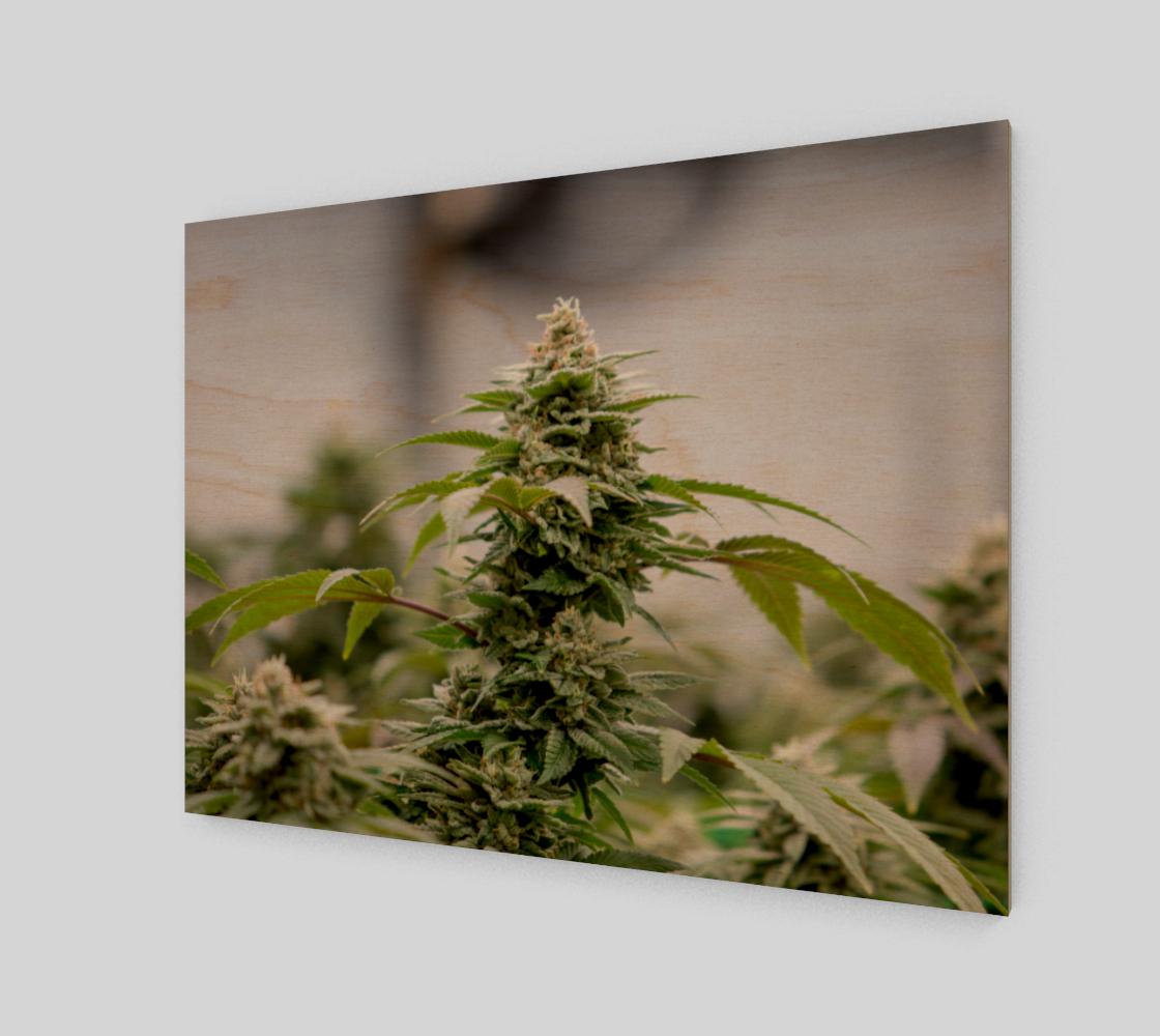 Aperçu de Standard Marijuana Wall Art 4:3