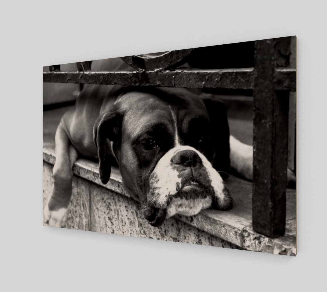 Boxer Dog On Windowsill Wall Art Miniature #3