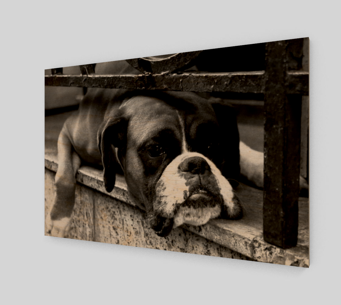 Aperçu de Boxer Dog On Windowsill Wall Art