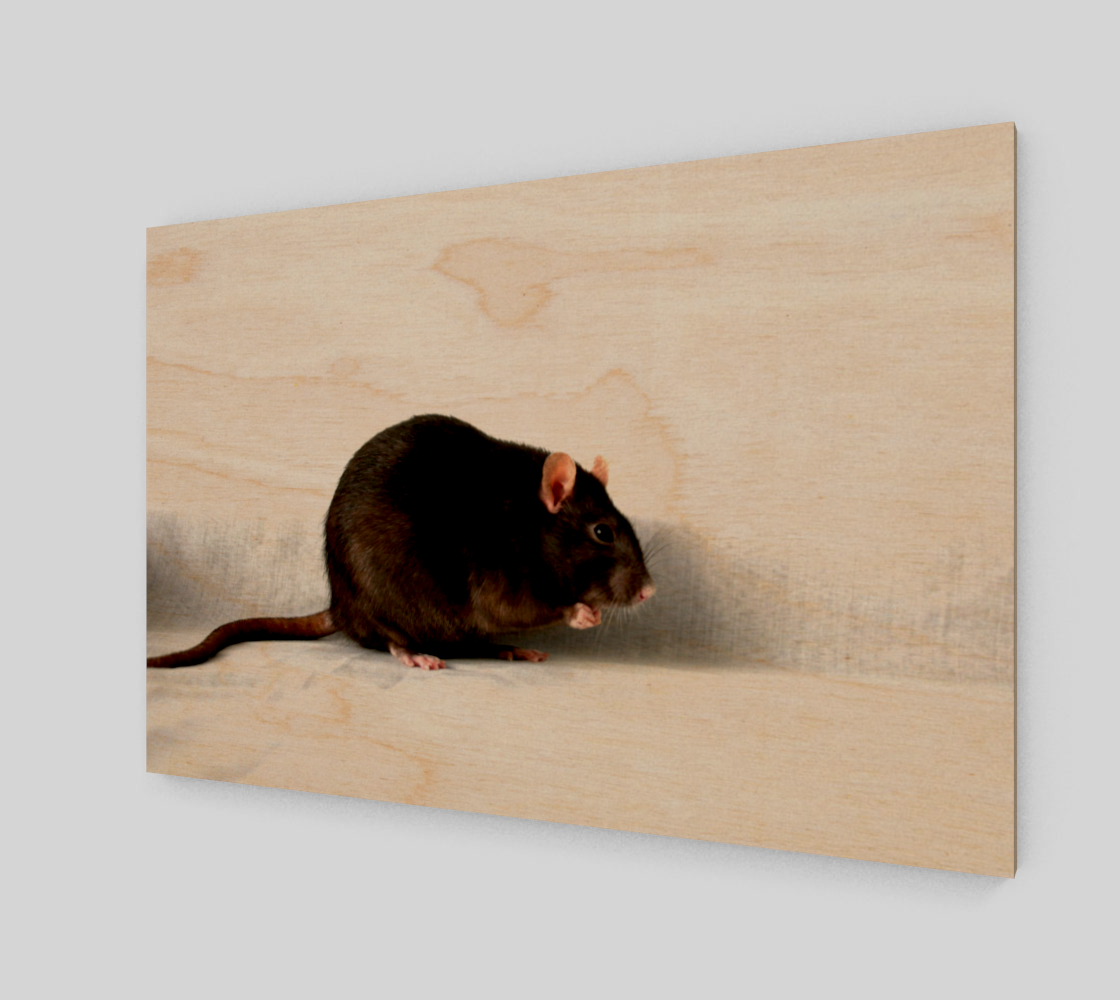 Rat Acrylic Print preview