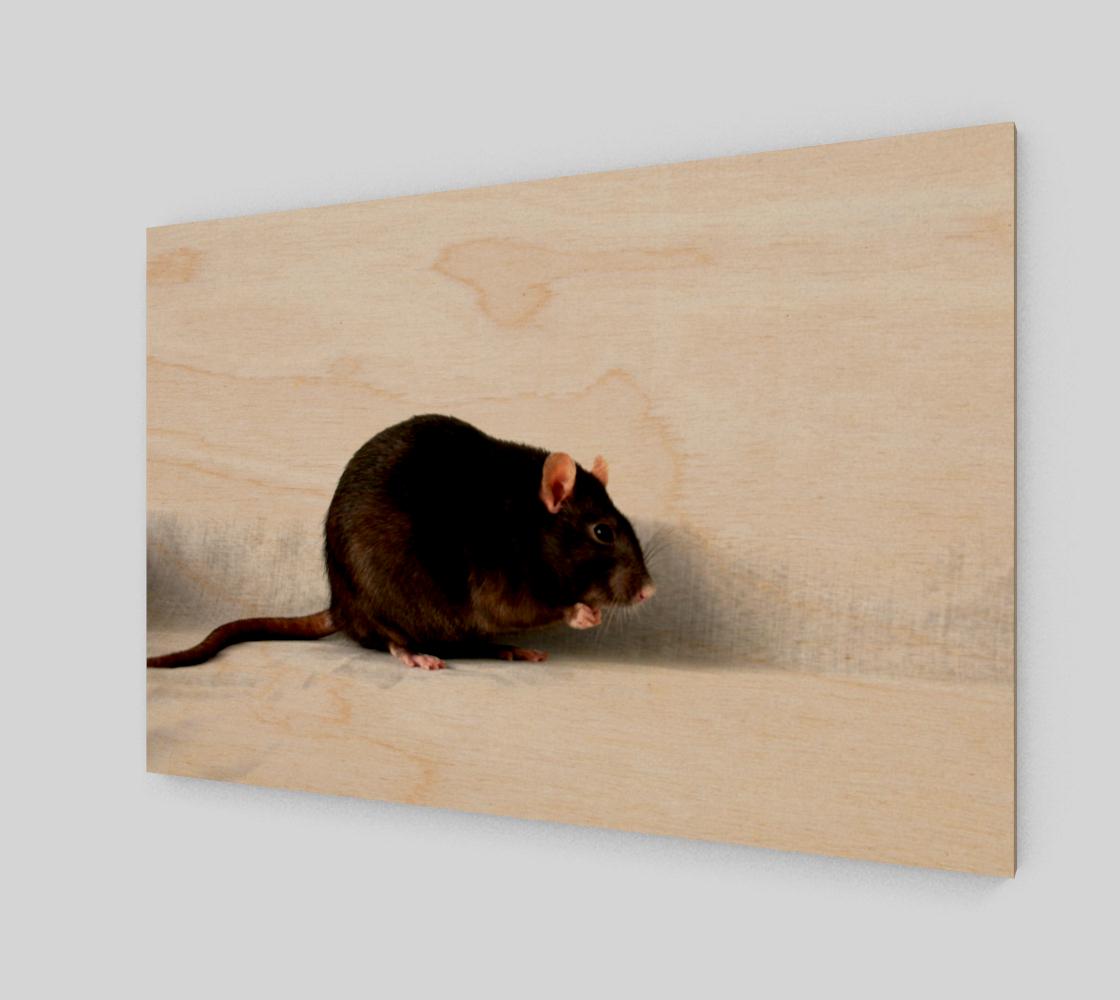 Rat Poster Print preview