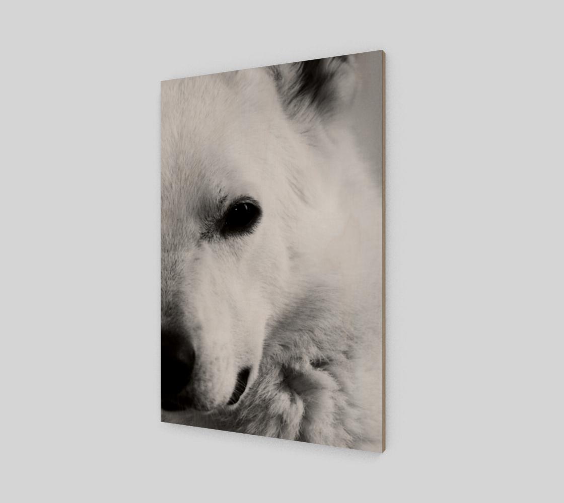 Aperçu de White German Shepherd Wood Print #2