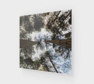 Aperçu de Skyward Pines Wall Art