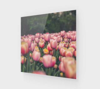 Aperçu de Field of Tulips