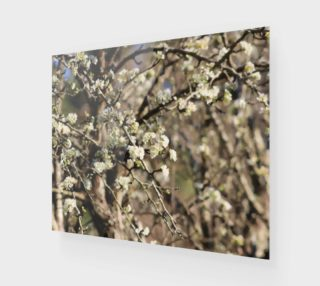 Pear Tree Blossoms preview