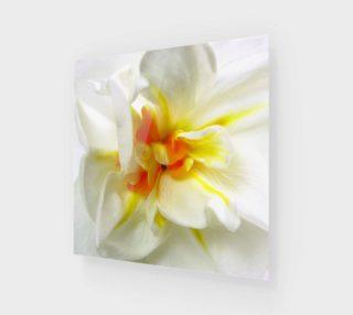 Sir Winston Churchill Daffodil preview