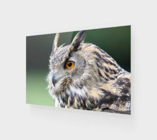 eurasian-eagle-owl-1642795__340 preview