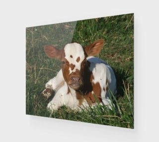 Baby calf preview