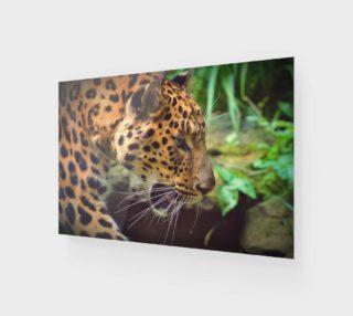 Aperçu de Leopard