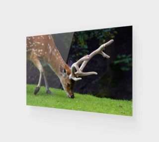 Fallow Deer preview