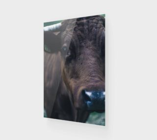 Cow preview