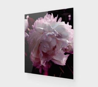 Peony pinks preview