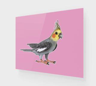Aperçu de Cockatiel bird