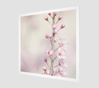 Cherry Blossom Flowers Nature Photo preview