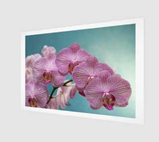 purple orchid preview