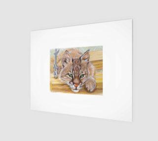 Shamrock Bobcat Kitten preview