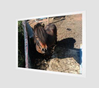 Aperçu de horsey