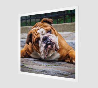 Chien grognon  |  Grumpy Dog preview