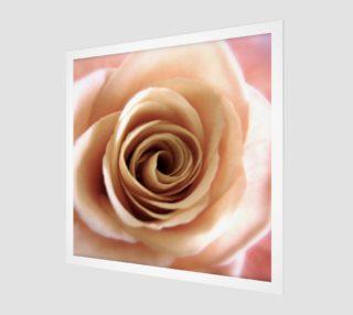 Aperçu de English Rose