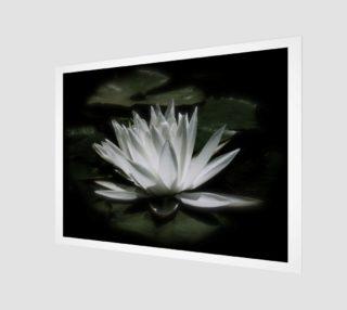 Aperçu de Water Lily By Moonlight