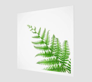 Fern preview