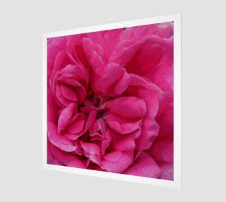 Multi Petaled Rose aperçu
