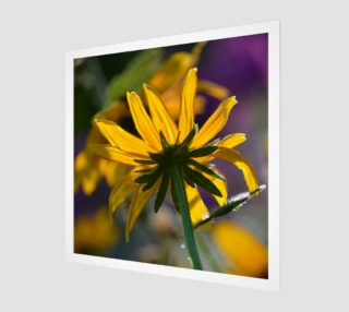 Black Eyed Susan Poster II preview