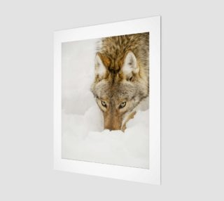 Coyote Art Print  preview