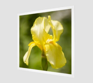 Yellow Iris Poster preview