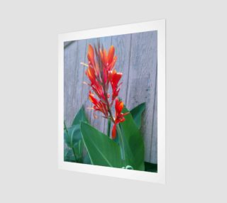 Aperçu de Canna Lily Photographic print by Tabz Jones