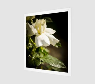 White Rose Art Print  preview