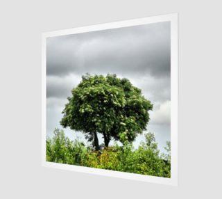 Aperçu de Lonely tree