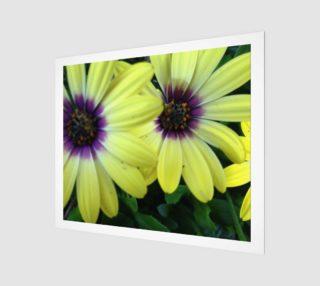 Aperçu de Delectable Daisy in Yellow & Purple 24