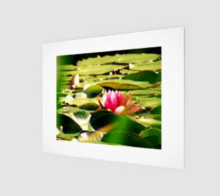 waterlily preview