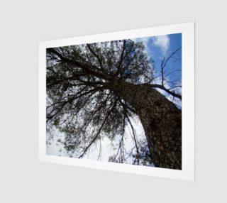 Aperçu de treeshade
