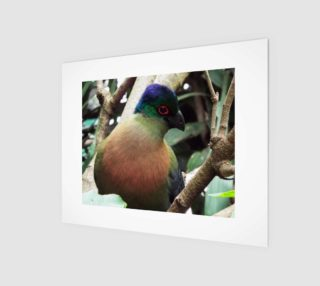 Purple Crested Turaco preview