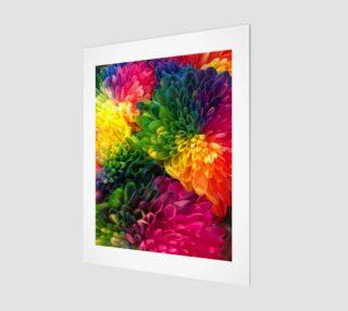 Aperçu de Rainbow Dahlias