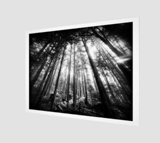 Aperçu de DSL100911-058 Holga infrared 7000px