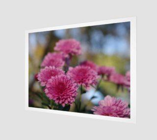 Aperçu de chrysanthemum 0479 30 x40