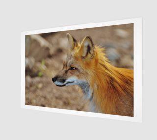 Inquisitive Mr. Fox aperçu